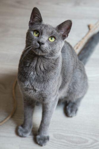 Welk kattenluik kunt u het beste kopen.